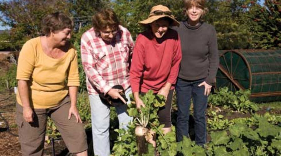 Community gardening — the benefits