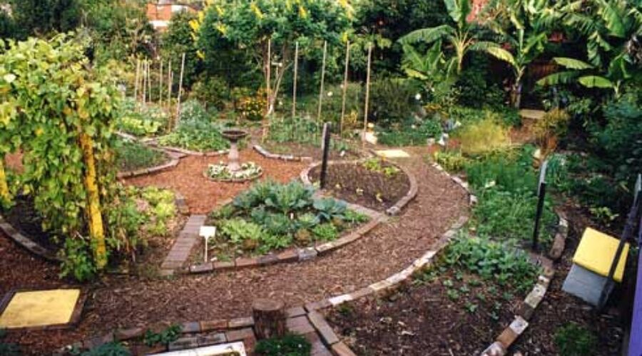 Looking back, a brief history of community gardens