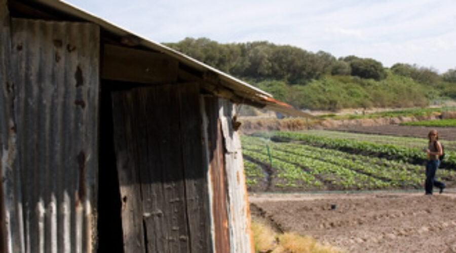 MEDIA RELEASE: Network encourages Minister to support city fringe foodlands