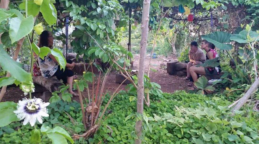 Two community gardens bloom in Darwin