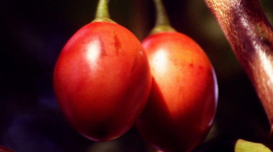 Fast fruits