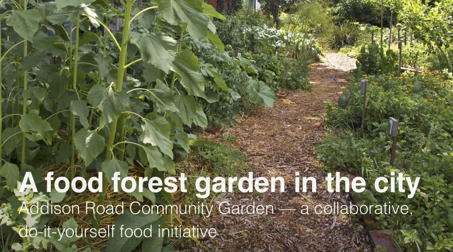 Food forest in the city
