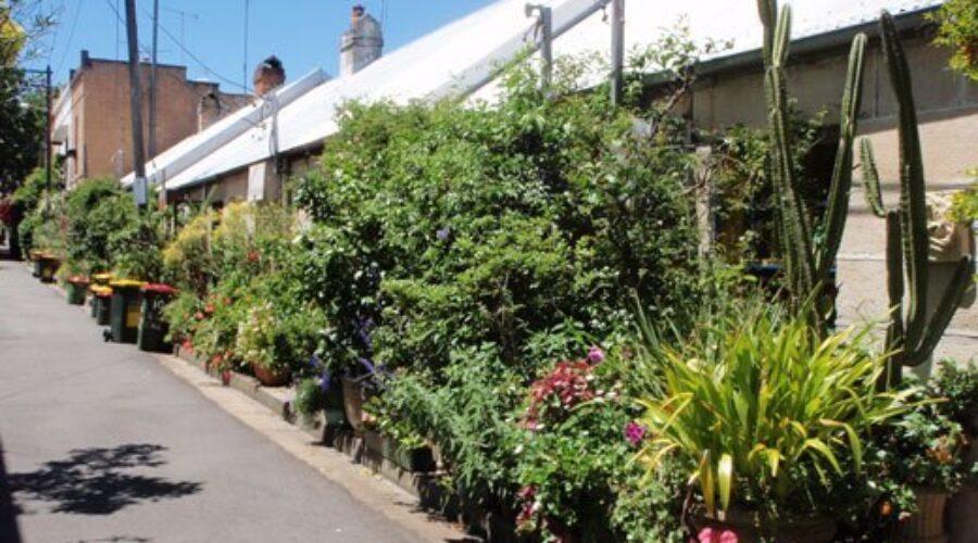 Ten ways council can help support community gardens