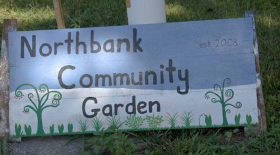 On the edge of Bellingen, an enterprising bunch of community gardeners
