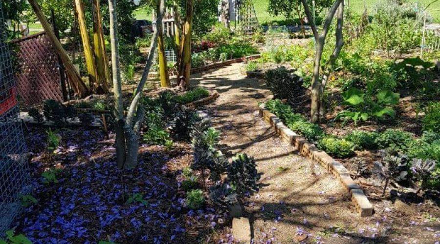 QLD — Koala Park Community Garden